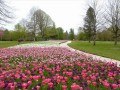 tulips-at-cheverny-07